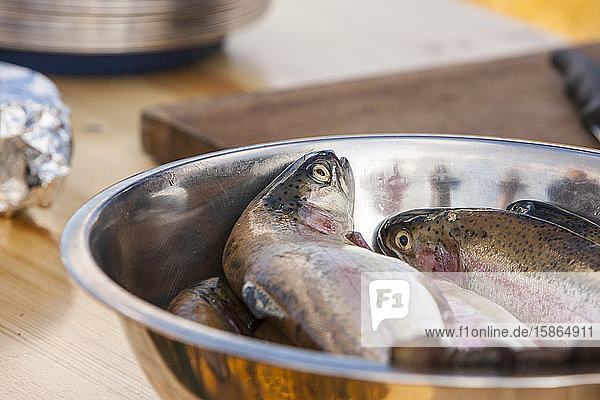 Fresh trout ready to cook  Scotland  United Kingdom  Europe