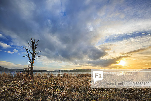 Dead tree on the shore of Lough Derg with a dramatic epic sunset in the sky in summer; County Clare  Ireland
