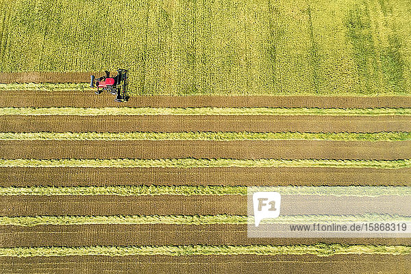 View from directly above of a swather cutting a barley field with graphic harvest lines; Beiseker  Alberta  Canada