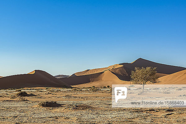 Dunes  Sossusvlei  Namib Desert; Namibia
