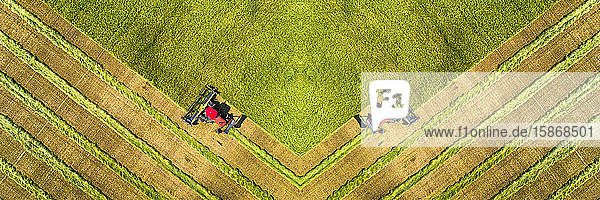 View from directly above of the mirror image of two swathers cutting a barley field with graphic harvest lines; Beiseker  Alberta  Canada