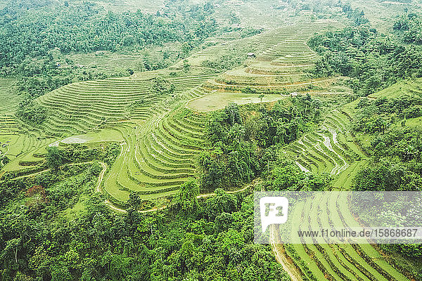 Drone view of rice terraces on the lush mountainside; Ha Giang Province  Vietnam
