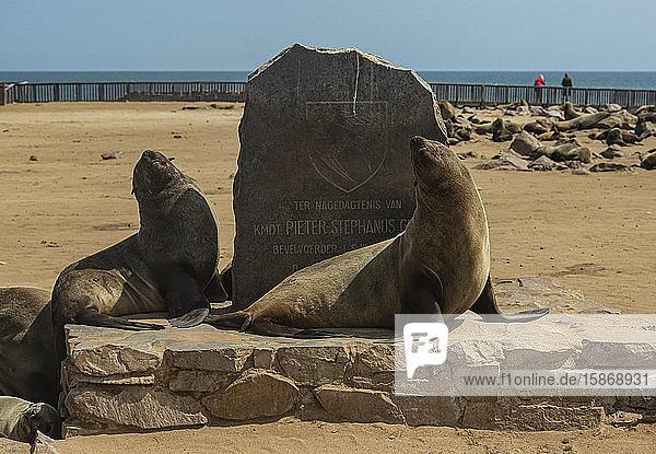 Fur seals at Cape Cross Seal Colony  Skeleton Coast; Namibia