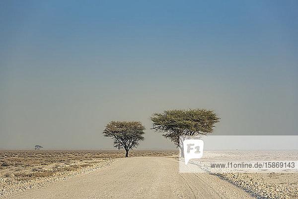 Etosha National Park; Namibia