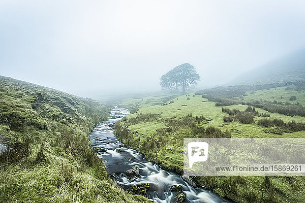 Small river cutting through a valley leading into the fog with three trees in the background  Galty Mountains; County Tipperary  Ireland