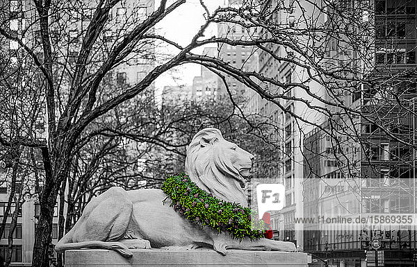 Veterans Day wreath draped on the neck of a lion sculpture in November in Manhattan with the image in black and white except the coloured wreath; New York City  New York  United States of America