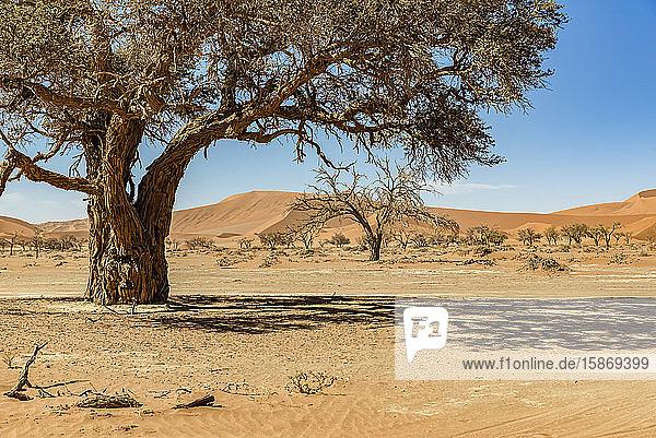 Sand dunes near Deadvlei  Namib Desert  Namib-Naukluft National Park; Namibia