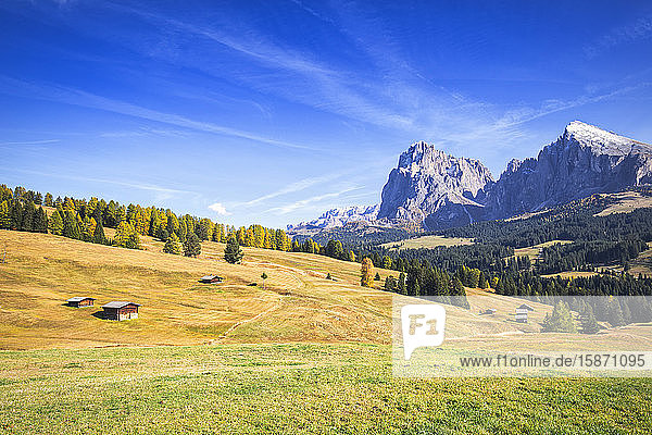 Autumn color at Seiser Alm  Dolomites  province of Bolzano  South Tirol  Italy  Europe