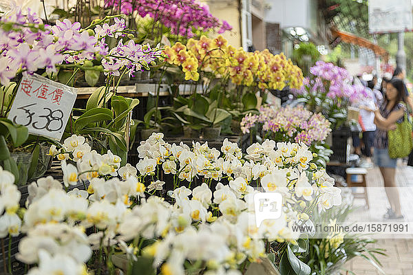 Orchids at Flower Market  Mong Kok  Kowloon  Hong Kong  China  Asia