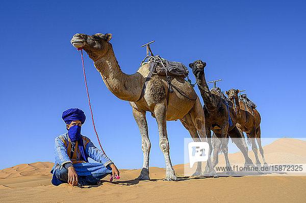 Berber and Camels  Sahara Desert  Morocco  North Africa  Africa
