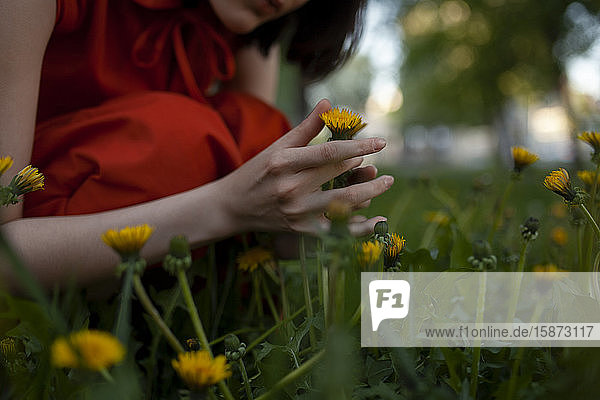 Hand of woman picking flowers Hand of woman picking flowers