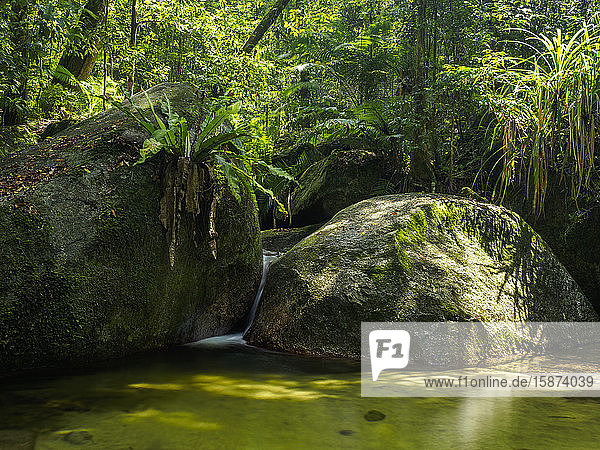 Rocks and pond in forest