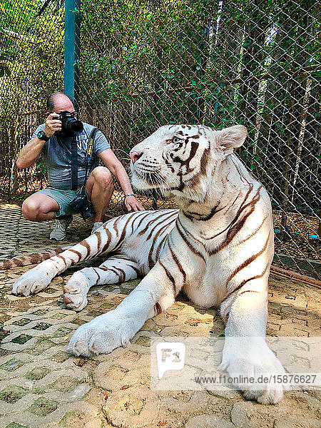Asia  Thailand  Chiang Mai  Tiger Kingdom