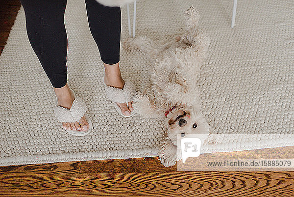 High angle view of fluffy white dog lying on cream coloured rug  woman in slippers standing beside him.