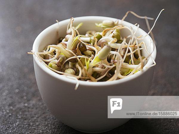 Schale mit frischen Mungbohnensprossen (Vigna radiata)