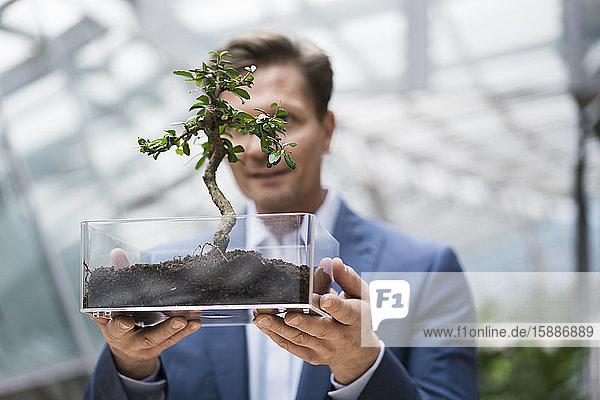 Geschäftsmann sieht Bonsai in durchsichtiger Schachtel wachsen
