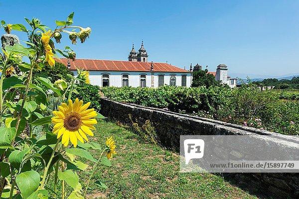 St. Martin of Tibaes Monastery  Sunflowers and Vegetable garden  Braga  Minho  Portugal.