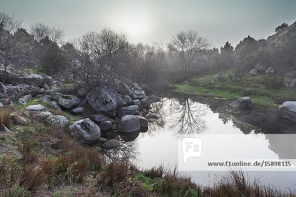 Reflections at a small lagoon in winter time in El Tiemblo. Avila. Spain. Europe.