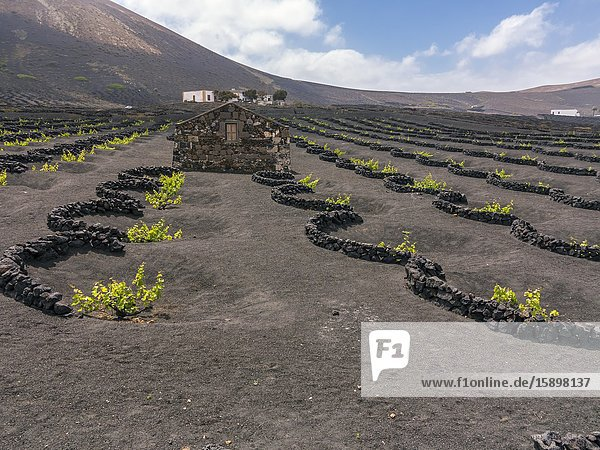 Houses and grapeyars in La Geria. Lanzarote. Canary Islands. Spain. Europe.