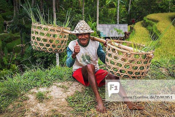 Rice farmer  Tegallalang Rice Terrace  Bali  Indonesia.