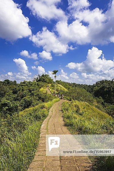 The Campuhan Ridge Walk  Ubud  Bali  Indonesia.