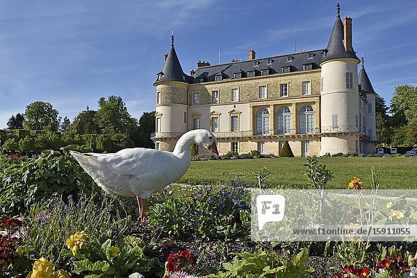 Domestic goose (Anser anser domesticus) in front of the chateau  Park of the Chateau of Rambouillet  Yvelines department  Ile de France region  France  Europe.