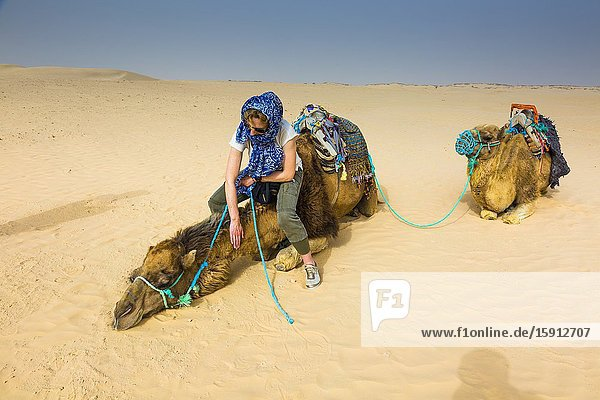 Woman in a dromedary ride in the desert. Douz  Tunisia  Africa.