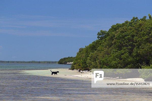 Dog in the beach  Key West  Florida  USA.