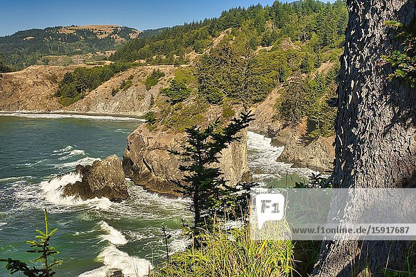 View north from Arch Rock Viewpoint  Oregon  USA.