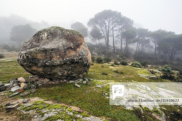 Round granite rock and fog at Concejo pinewood. Madrid. Spain. Europe.