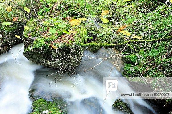 The Saja-Besaya Natural Park. Cantabria province  Spain.