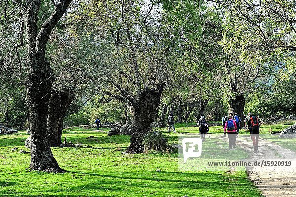The Forest de La Herreria. San Lorenzo del Escorial town  Madrid province  Spain
