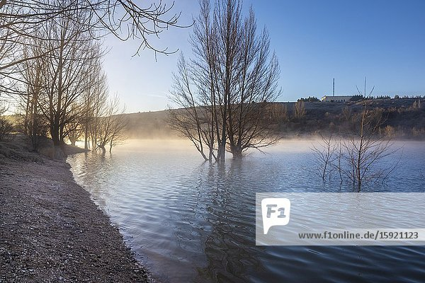 Poplars and fog at Linares del Arroyo reservoir in Maderuelo. Segovia. Spain. Europe.