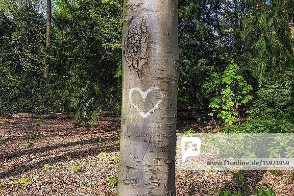 Heart painted on a tree.