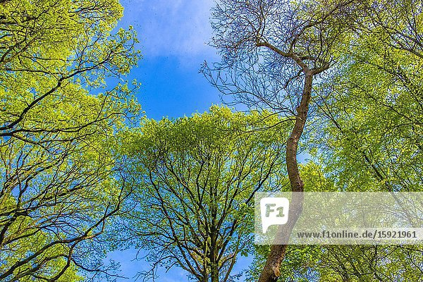 Trees in spring  view from below.