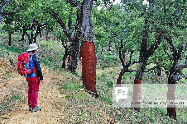 Hiker in the Villuercas-Ibores-Jara Geopark. Cáceres province  Spain