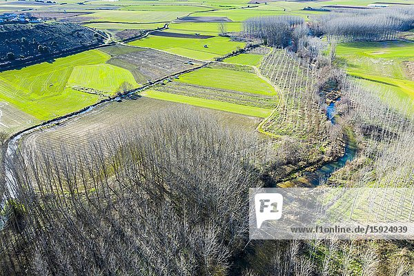 Agricultural area  river and poplar grove. Aerial view. Ancin area. Navarre  Spain  Europe.