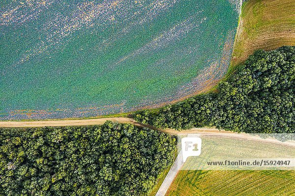 Agricultural area and forest. Aerial view. Ancin area. Navarre  Spain  Europe.