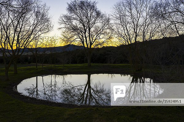 Pool and trees. Aerial view. Ancin area. Navarre  Spain  Europe.