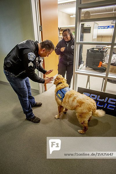 Wearing her official jacket  a comfort dog interacts with police department personnel in Hawthorne  CA.