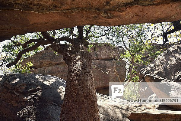 India  Madhya Pradesh  World Heritage Site  Bhimbetka rock shelters.The Bhimbetka site is one of the largest prehistoric complexes in the world and has the oldest known rock art in the Indian subcontinent. Its earliest cave paintings are about 10 000 years old (8000 BC).