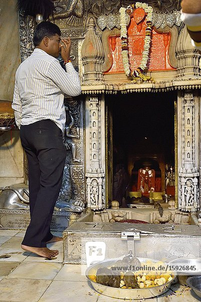 India  Rajasthan  Bikaner region  Deshnoke  Karni Mata Temple also known as the Temple of Rats  Morning puja (prayer).