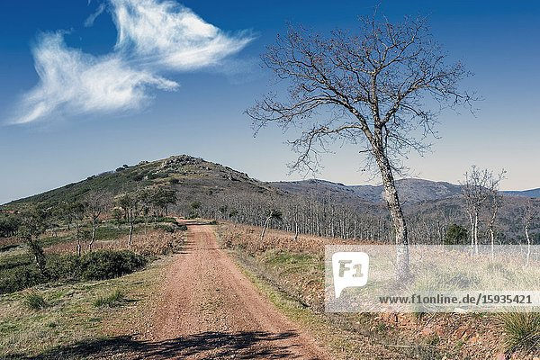Oaks at Retuerta pathway and Morrilla hill in Toledo's Hills. Spain. Europe.