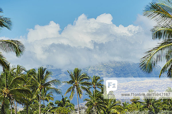 Maili Beach Park  Leeward Coast  Oahu  Hawaii  USA