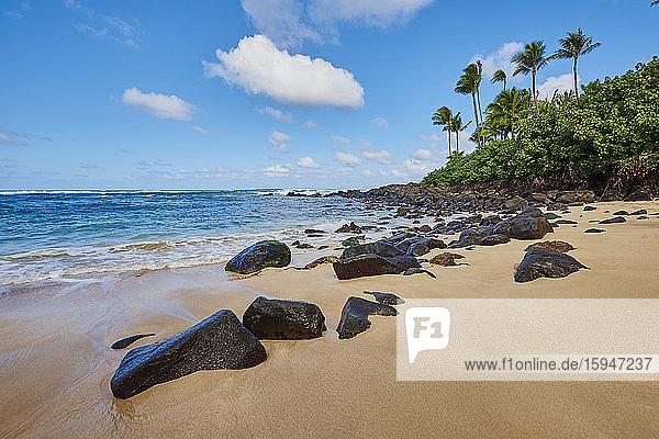 Laniakea Beach  Haleiwa  Oahu  Hawaii  USA