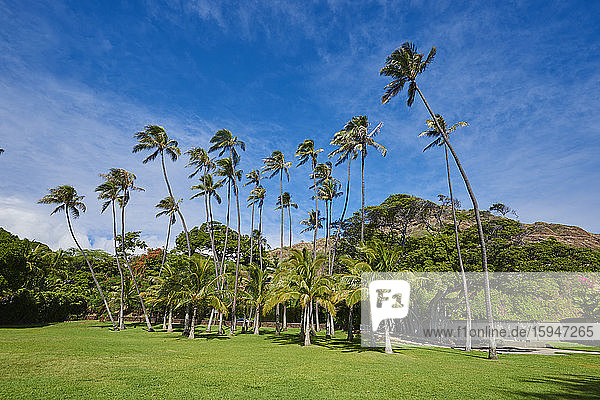 Palm beach  Honolulu  Oahu  Hawaii  USA