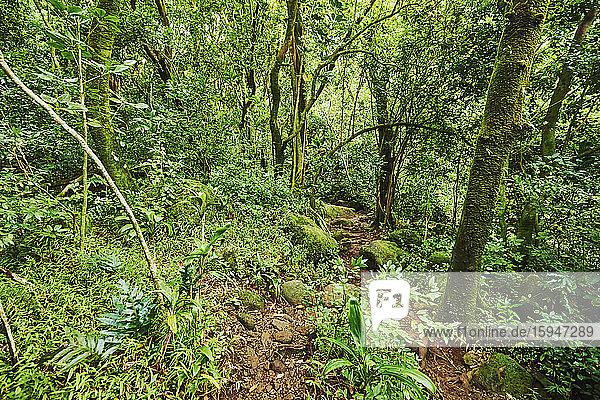 Lulumahu trail  Honolulu Watershed Forest Reserve  Oahu  Hawaii  USA