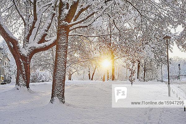 Trees in winter  Regensburg  Bavaria  Germany  Europe