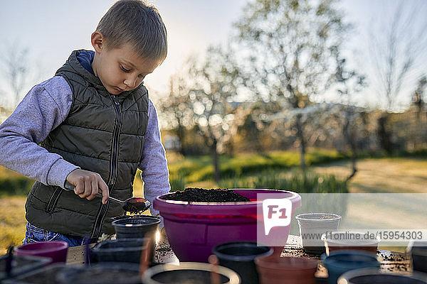 Porträt eines Jungen beim Gärtnern auf dem Tisch Porträt eines Jungen beim Gärtnern auf dem Tisch