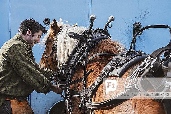 Geschirr zur Befestigung des Holzfällers auf einem seiner Arbeitspferde.